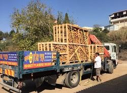 עופר חובב קושר את העצים למשאית